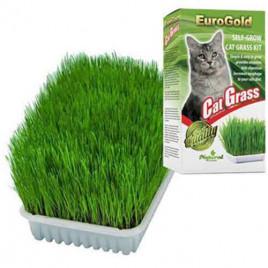 Eurogold Cat Grass Kedi Çimi