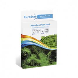 EuroStar Bitki Toh Hemianthus Callitrichoides