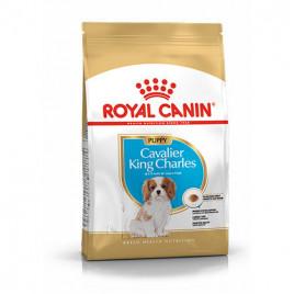 Cavalier King Charles Yavru Kuru Köpek Maması 1,5 Kg